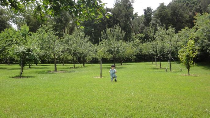 Orchard - MtVernon